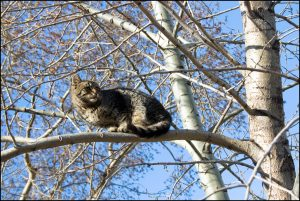 stockvault-cat-in-tree140084